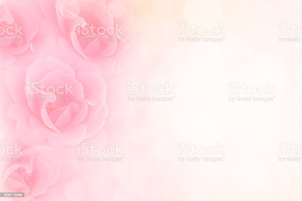 pink roses flower vintage background for special events stock photo