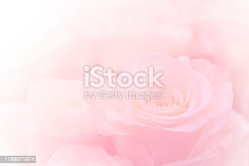Pink Roses Flowers Bouquet on light pink background. soft filter.