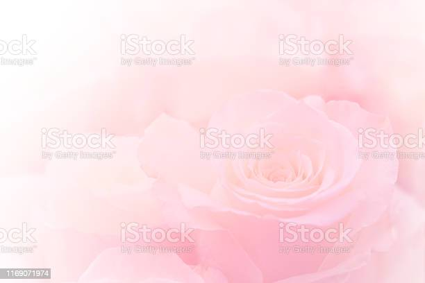 Photo of Pink Roses Flowers Bouquet on light pink background. soft filter.