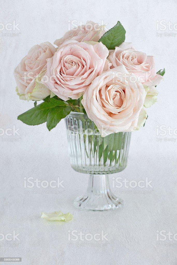 Rosa Rosen Blumen  Lizenzfreies stock-foto