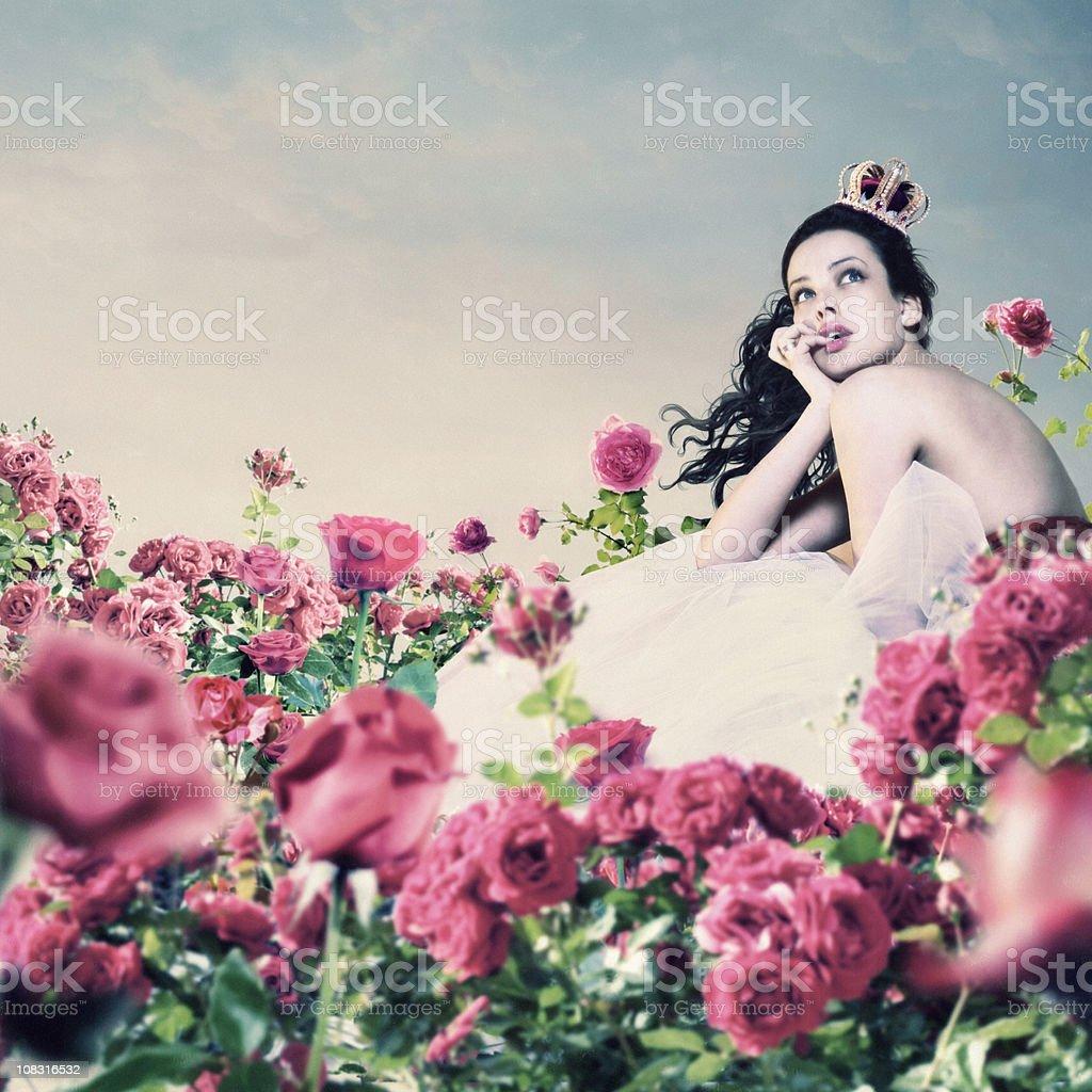 pink roses garden stock photo