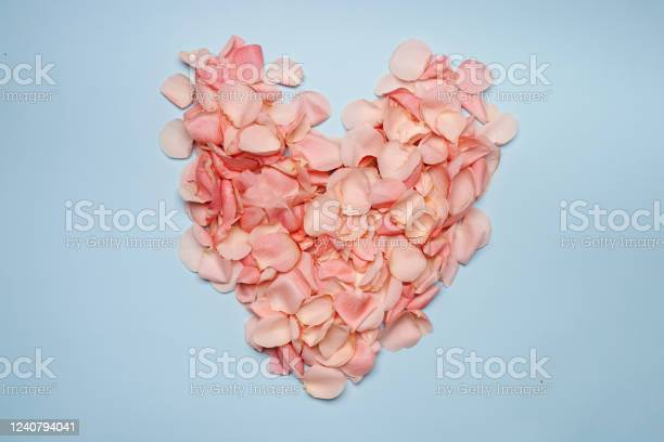 Pink roses heart from petal on blue background picture id1240794041?b=1&k=6&m=1240794041&s=612x612&h= yl8jr lyl8 g h3emboxzsc ocl2hyns hr7b9ig a=