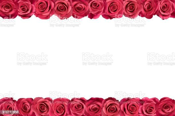 Pink roses in rows 2 picture id910112856?b=1&k=6&m=910112856&s=612x612&h=xwenmputq6ynbcknhs2i9mq1vzqcz6fhrsx  fzw3ak=