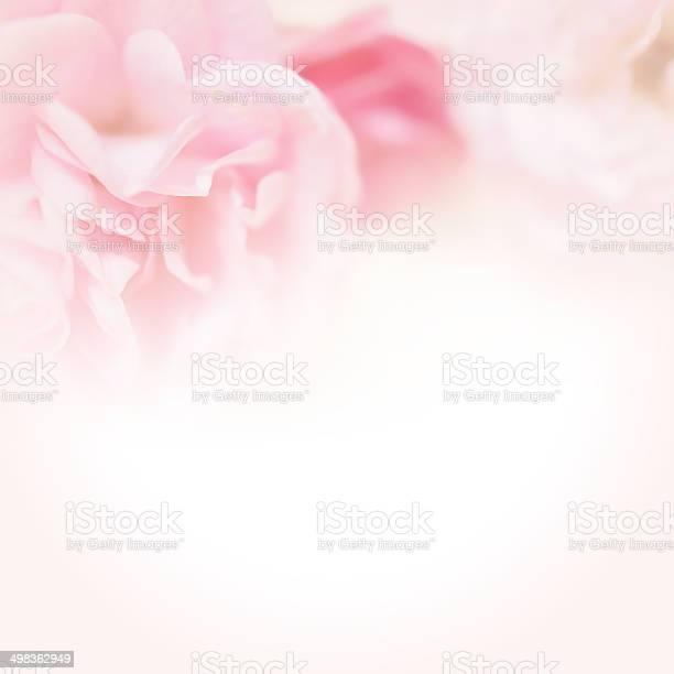Pink roses in soft color style picture id498362949?b=1&k=6&m=498362949&s=612x612&h=3ibad zr2gjfyr6zrzqabeq4osazj8jwgk8j3h2l2su=