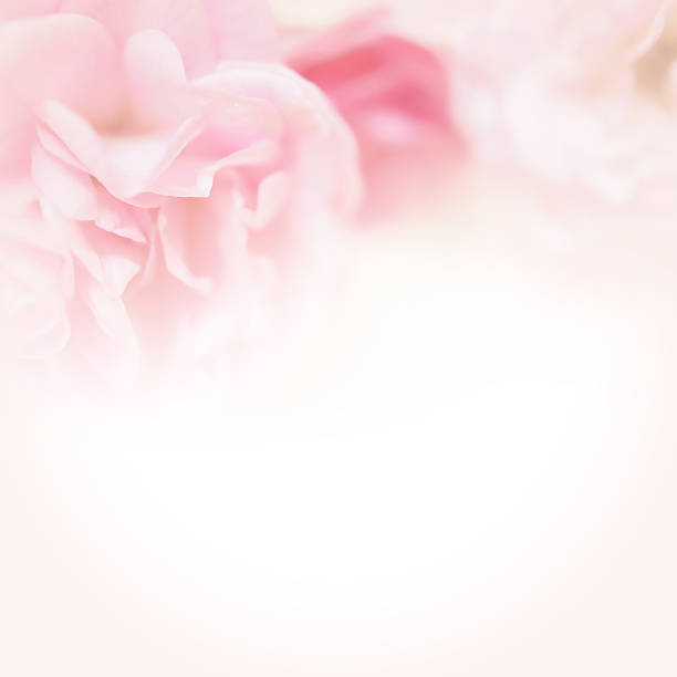 Rosa Rosen in weichen Farben Stil – Foto