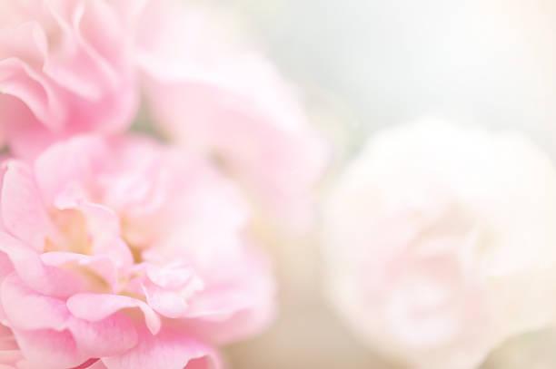 Pink roses in soft color style picture id498389975?b=1&k=6&m=498389975&s=612x612&w=0&h=dzj lvx6hw0akujsicbn93locfjmwi uuq7coopnodu=