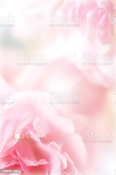 Pink roses in soft color style picture id498397465?b=1&k=6&m=498397465&s=612x612&h=cxvfemsqz1sr9puwdp1yycn0jjuiobwhkbpe97rmuge=
