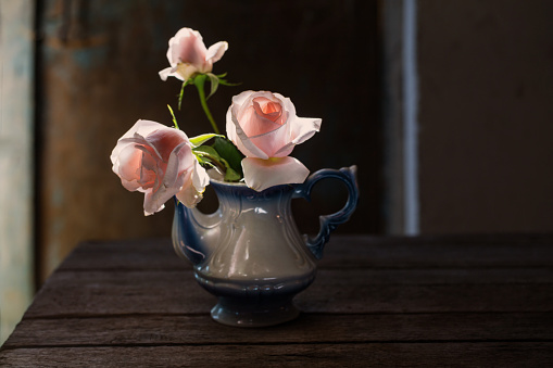 pink roses in teapot on grunge background