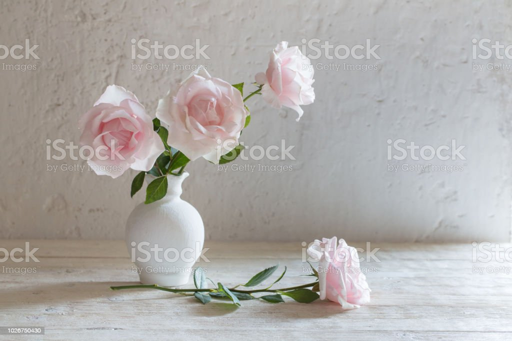 pink roses in vase on white background stock photo