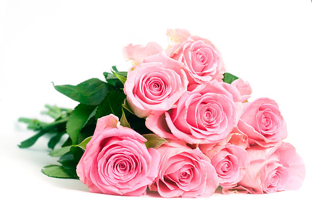 Pink roses isolated on a white background picture id115884845?b=1&k=6&m=115884845&s=612x612&w=0&h=83jmm3jcskabam45zqwkvkzut085lumlq43vdjr5tqo=