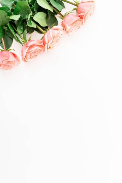 Pink roses isolated on white background flat lay top view picture id910171670?b=1&k=6&m=910171670&s=612x612&w=0&h=7ili43btprdk8zdb35rfzc8pmqsmpzjy diihueu0gu=