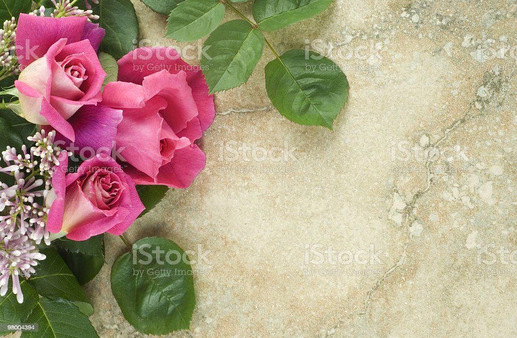 Pink Roses Lilac Green Leaves Vintage Background royalty-free stock photo