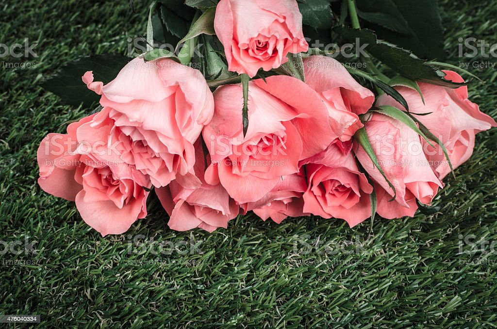 Pink roses lying on green grass stock photo
