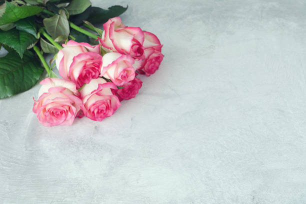 Pink roses on gray background picture id674273918?b=1&k=6&m=674273918&s=612x612&w=0&h=wmhklxi0qt28g1eugt wmtb13tdzkmw5lu8x ypv oo=