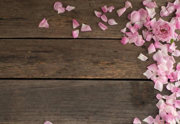 Pink roses on the old wooden floor picture id1135905671?b=1&k=6&m=1135905671&s=612x612&w=0&h=fdmqhgqwddrixc6ut1z0juwqlofgtoev vjdm8g6xyo=