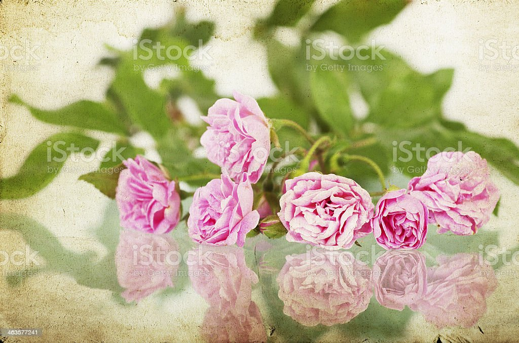 Pink Roses On Vintage Paper Background Royalty Free Stock Photo