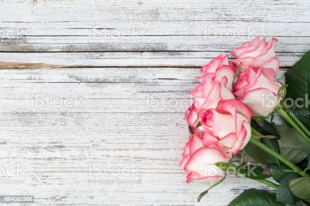 Pink roses on vintage white background picture id664062566?b=1&k=6&m=664062566&s=612x612&h= hp  iyedcmnvhdcgypp jubt7ehhnrc8x257 wz7bw=