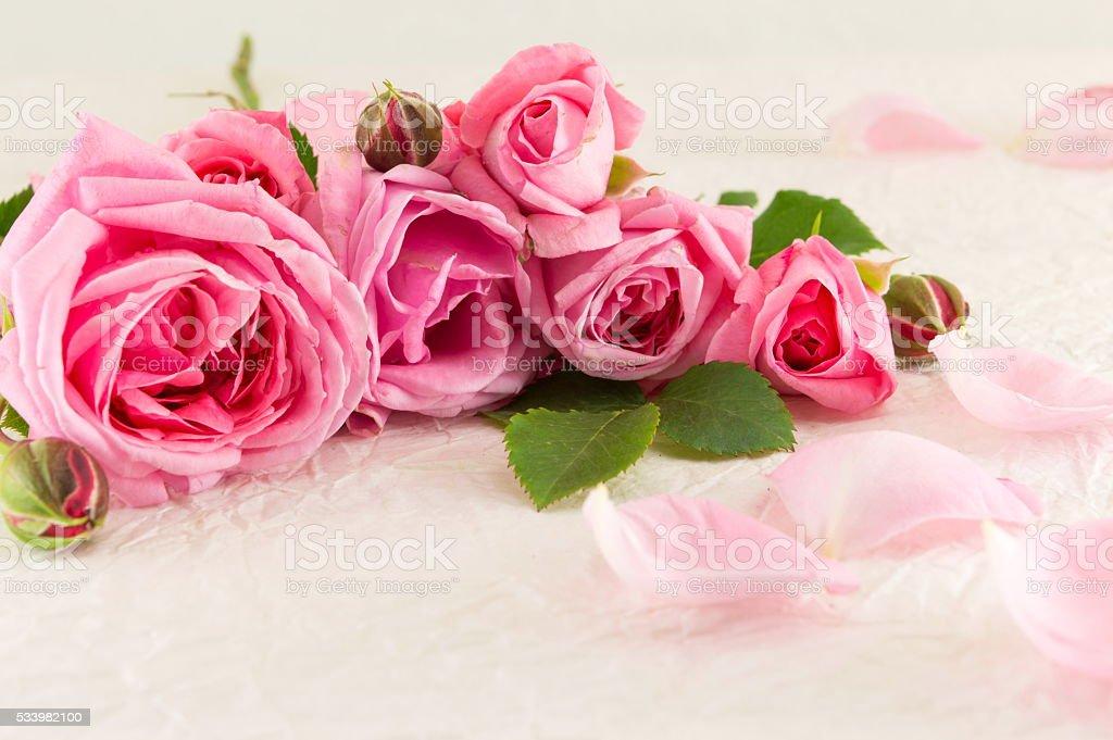 Pink roses on white silk textile stock photo