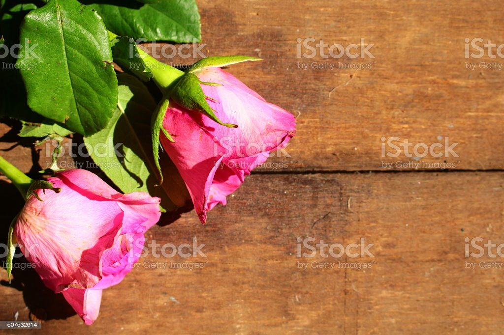 Pink roses on wooden floor stock photo