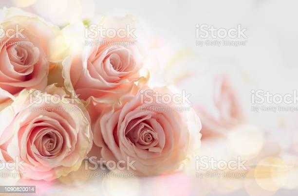 Pink roses picture id1090820014?b=1&k=6&m=1090820014&s=612x612&h=htbxoc46ilpi6hnj2x4srwqfs4nw4bzzuyrs04fgqzg=