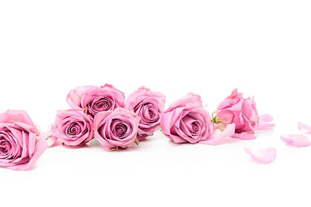 Pink roses picture id175214248?b=1&k=6&m=175214248&s=612x612&w=0&h=3zfzxxpxitwk5sofszkb6bk4mwz 1mxn73jlpzjxszo=