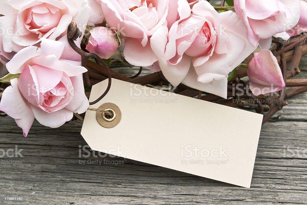 Rosas cor-de-rosa - foto de acervo