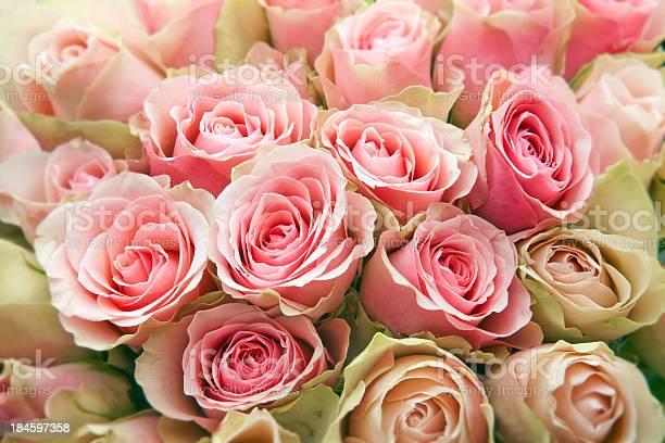 Pink roses picture id184597358?b=1&k=6&m=184597358&s=612x612&h=3w7 w1sh873jprojda5t0szjj2o5un phhjrejac6so=
