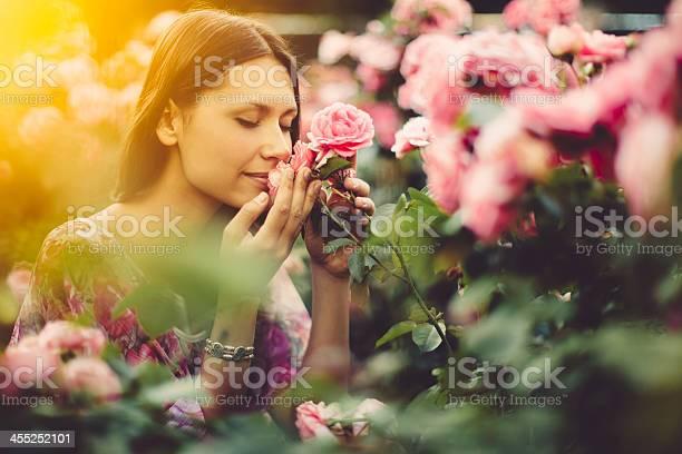 Pink roses picture id455252101?b=1&k=6&m=455252101&s=612x612&h=lvv0xg1ssriapvebsgkwycbgi9jtcrfcmevnn6t5xce=