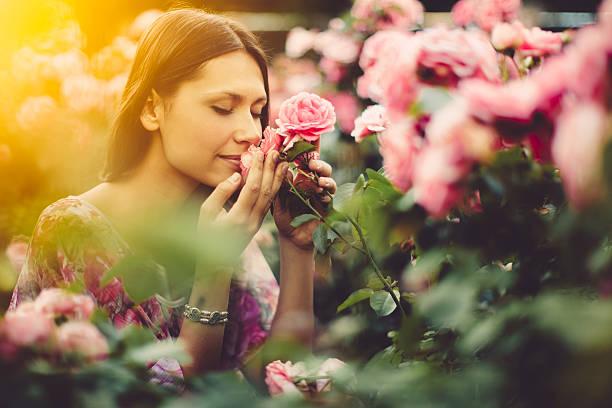 Pink roses picture id455252101?b=1&k=6&m=455252101&s=612x612&w=0&h=mhscujsb5rbsx4tb42dcmgnp ovnq9gfc4o7hylixwc=