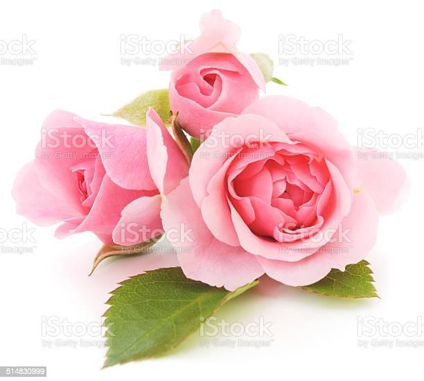 Pink roses picture id514830999?b=1&k=6&m=514830999&s=612x612&h=mp2dntcmuljuzmxvgwonlwglafhbdrjotej6l1dlix0=