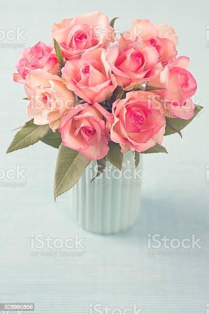 Pink roses picture id528960856?b=1&k=6&m=528960856&s=612x612&h=qt4y8c0bzgbrbzhituqz2 dlhsrz5uy4phr qdvcecq=