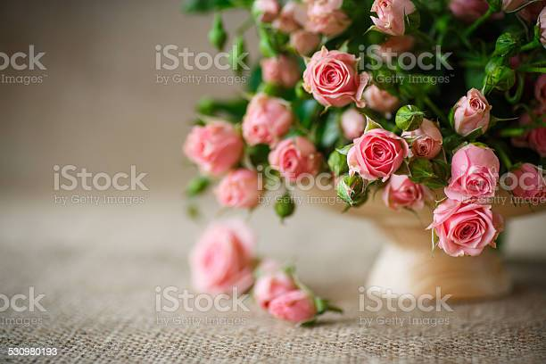 Pink roses picture id530980193?b=1&k=6&m=530980193&s=612x612&h=bnehu1hxbe2yvmzh17pbowmybfxcqv v91jlzxep7hg=
