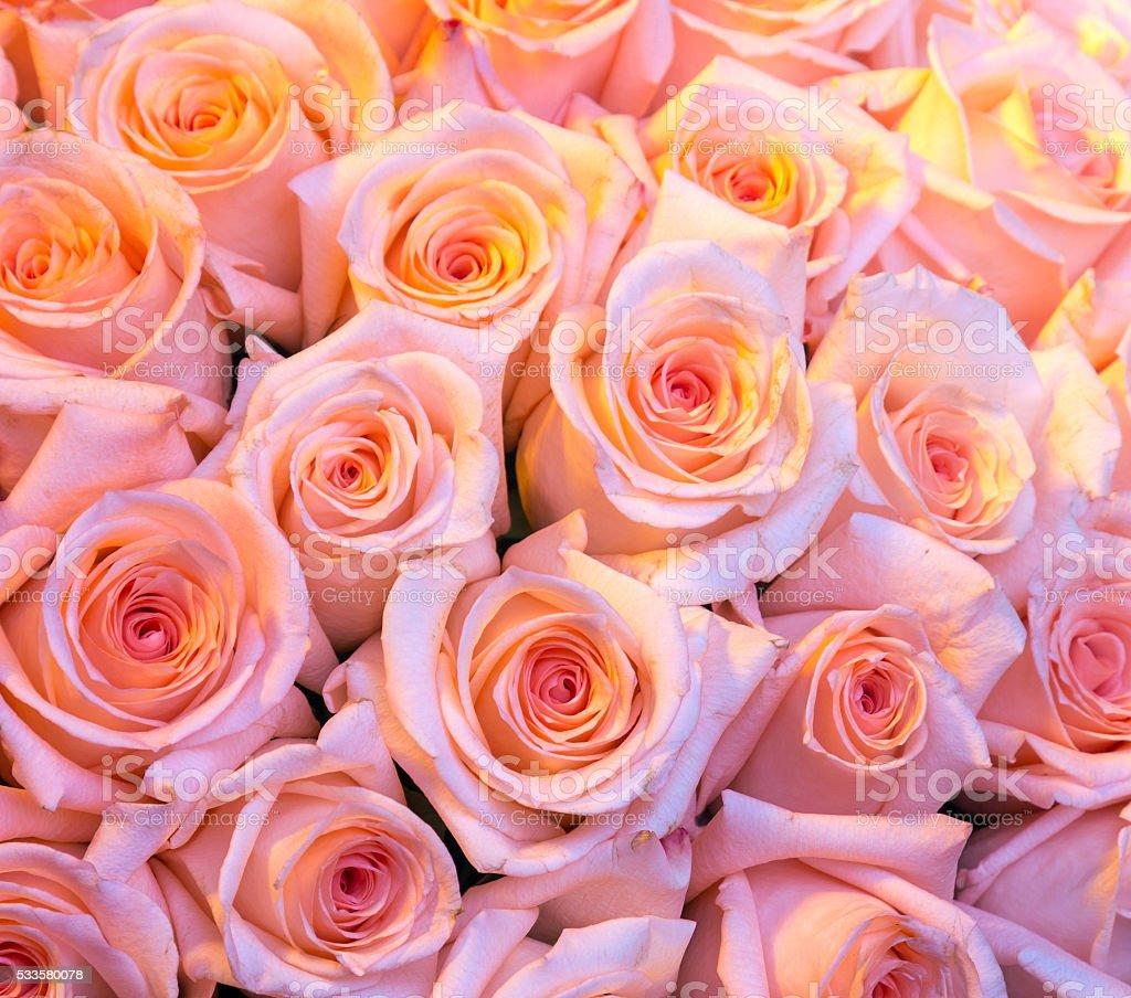 ピンクのバラの壁紙 お祝いのストックフォトや画像を多数ご用意 Istock