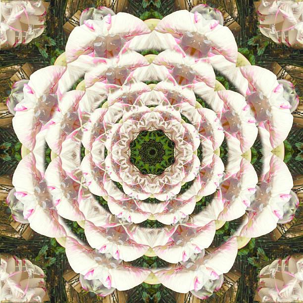 Pink Sacred Lotus Flower in Bloom Kaleidoscopic Photographic Mandala Design stock photo