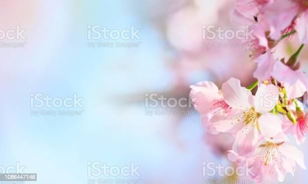 Pink sakura petals flower background romantic blossom sakura flower picture id1086447146?b=1&k=6&m=1086447146&s=612x612&h=sexycbpw5ejxarafuqpjoavf4anpuseqksew91pbmw0=