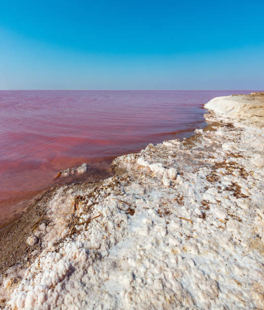 pink salty syvash lake, ukraine - deposition stock pictures, royalty-free photos & images