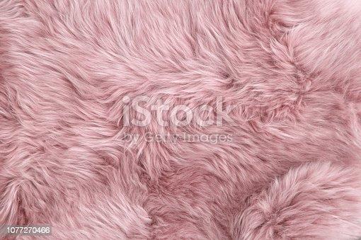 Pink sheep fur. Natural sheepskin rug background texture