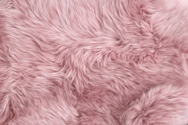Pink sheep fur Natural sheepskin background texture Pink sheep fur. Natural sheepskin rug background texture fur stock pictures, royalty-free photos & images