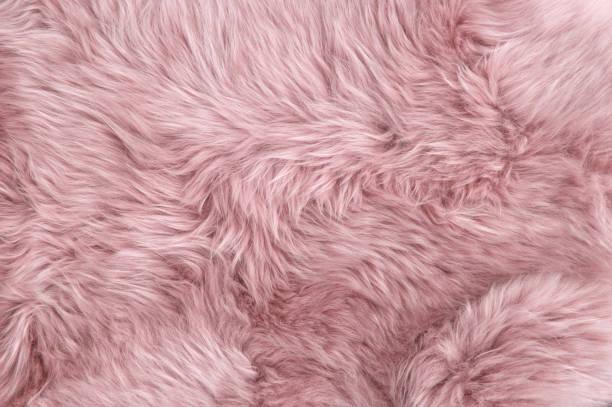 Pink sheep fur Natural sheepskin background texture stock photo