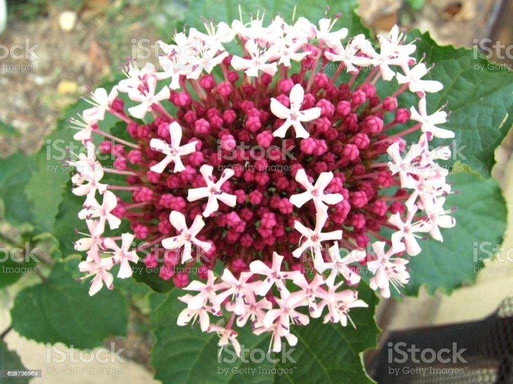 Pink spike flower stock photo 638736964 istock pink spike flower royalty free stock photo mightylinksfo