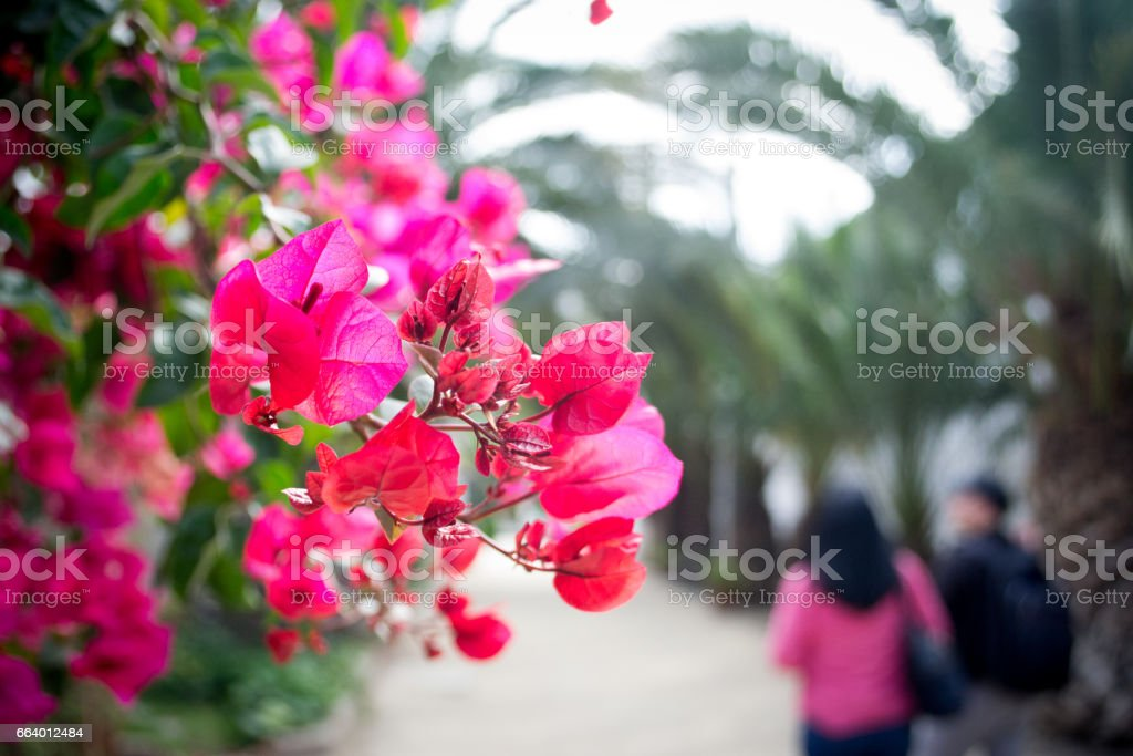 Pink spring flowers in the park stock photo