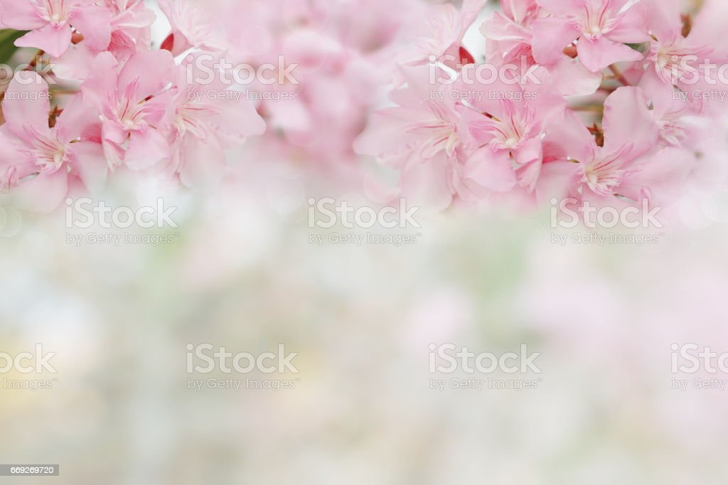 pink spring flowers on spring bokeh background stock photo