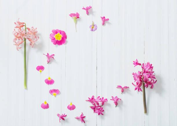 흰색 나무 바탕에 분홍색 봄 꽃 - 히아신스 뉴스 사진 이미지