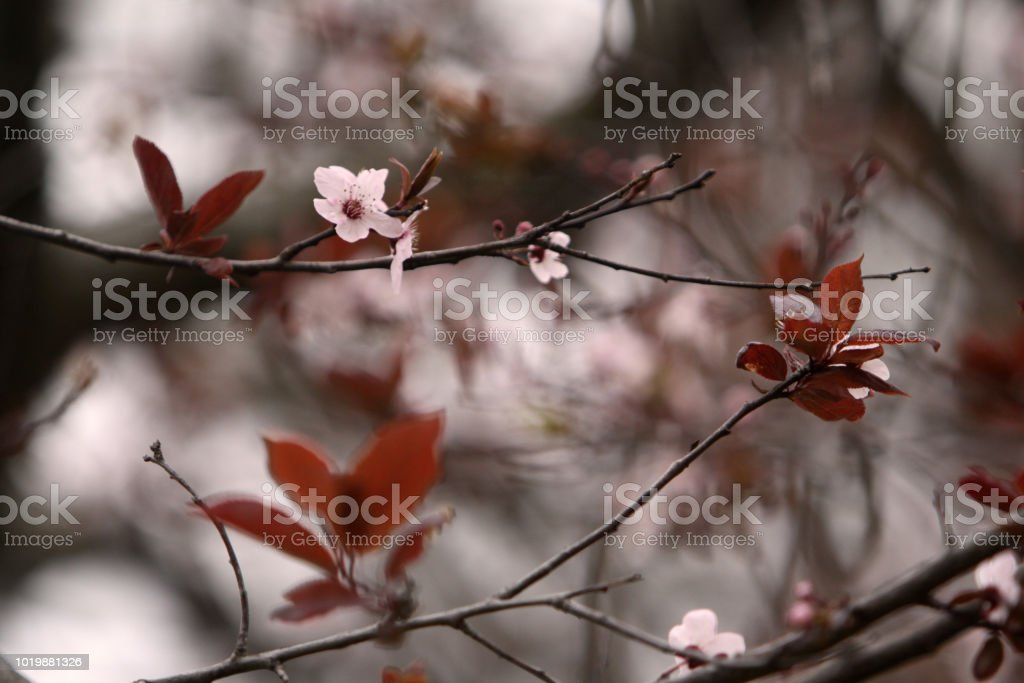 pink spring flowers stock photo