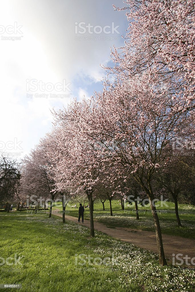Pink spring park in Rome, Italy royalty-free stock photo