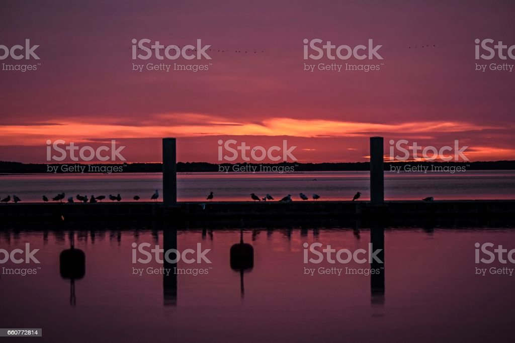 Pink sunset inmarine with a birds sitting on a jetty stock photo