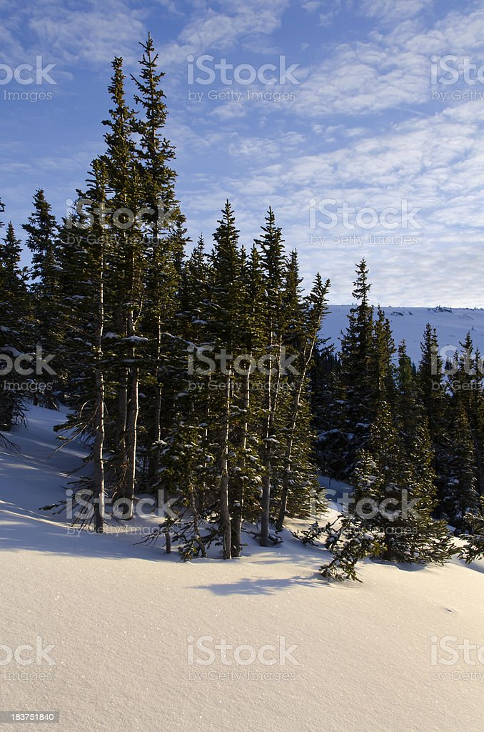 Pink Sunset Light and Winter Landscape Trees stock photo