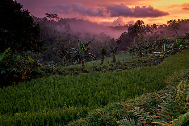 Pink sunset over indonesian rainforest, Java, Indonesia stock photo