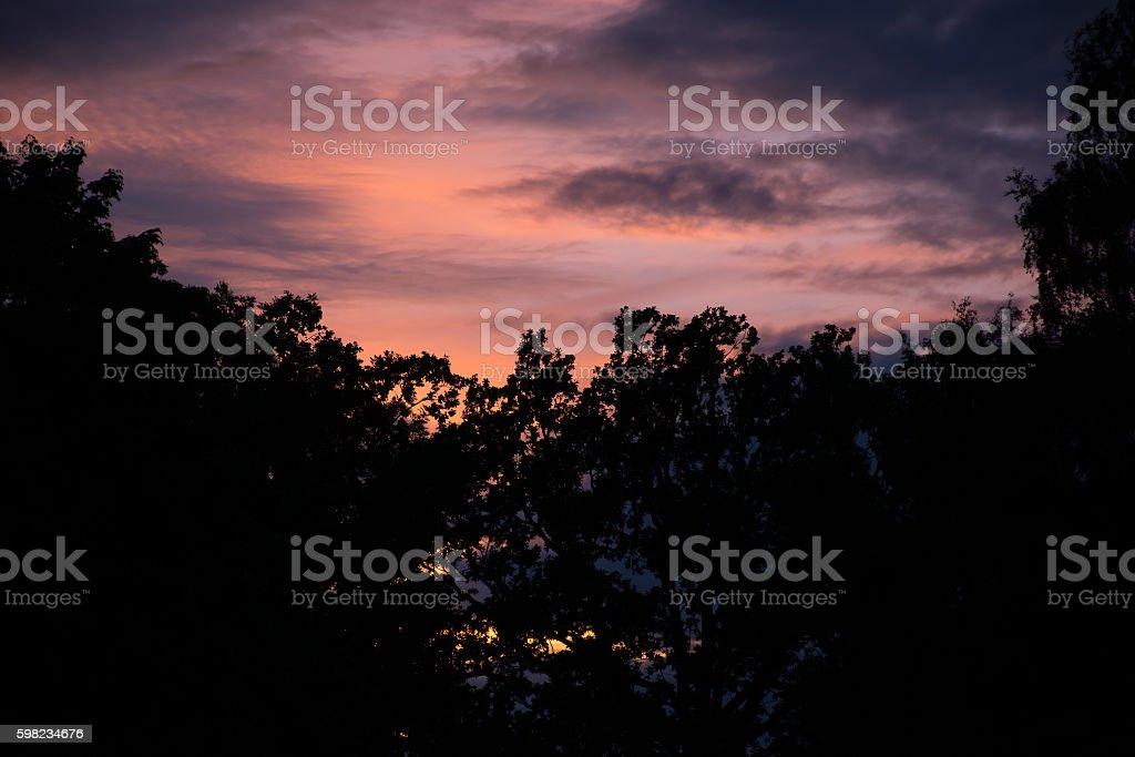 Pink Sunset Sky With Dark Tree Silhouettes foto royalty-free