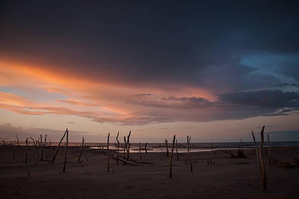pink sunset con cadáveres de palmeras en la playa - foto de stock